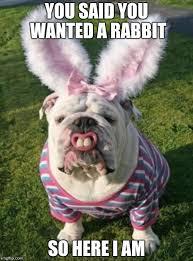 French Bulldog Meme - 20 cute and funny bulldog memes sayingimages com