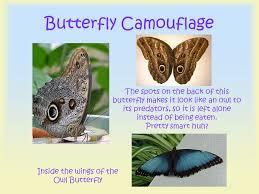 all about beautiful butterflies ppt