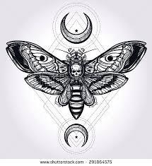 best 25 skull moth ideas on illustration moth