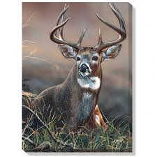 prints of deer images whitetail deer wrapped canvas millette