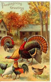 Thanksgiving Turkey Photos Free 549 Best Thanksgiving Graphics Images On Pinterest Thanksgiving