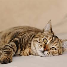 Image 9 Best Grumpy Cat - 9 best grumpy cat memes