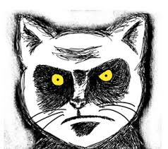 Angry Meme Face - picture angry cat glare meme comic face