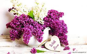 purple spring flowers bokeh u2013 free download hd wallpapers