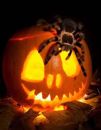 halloween in merseyside liverpool echo