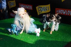 2014 halloween dog parade anthony rubio designs dog fashion