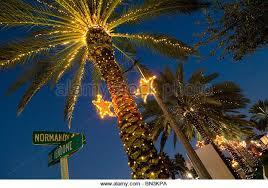 palm tree christmas lights stock photos u0026 palm tree christmas