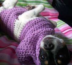 38 best alphabet images on pinterest dog sweater pattern dog