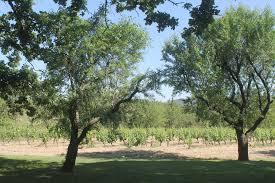 Un Mas En Provence Provence Wine Tasting Chateau La Canorgue Provence Guru