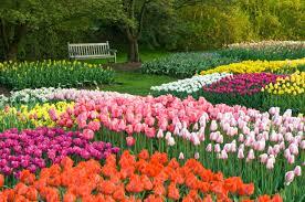 the idea garden spring bulb display longwood gardens