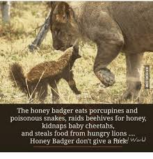 Meme Honey Badger - honey badger don t care honey badger meme on me me