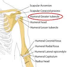 Innervation Of Supraspinatus Supraspinatus Muscle Action Origin U0026 Insertion Study Com