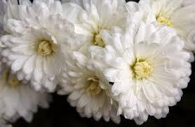 white flower white flower up by woodenox on deviantart