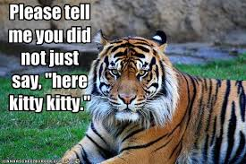 Funny Tiger Memes - black and white fun funny tigers dont call me kitty roar