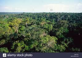 canopy amazon aerial view of canopy of amazon rainforest near manaus brazil stock