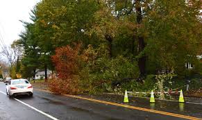 utilities say trees to blame for october outages