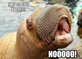 Walrus Meme - nooooo they stole le bucket they stole le bucket screaming