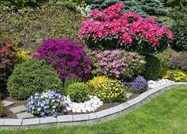 cura giardino concime naturale per gerani non sprecare