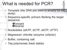 chromosome 16 pv92 pcr what is pcr dna replication gone crazy