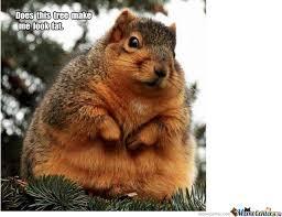 Meme Animals - fat animals by thelonebadger meme center