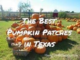 Pumpkin Patch Frisco Tx by The Best Pumpkin Patches In Texas Having Fun In The Texas Sun