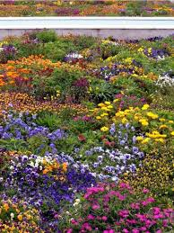 indian garden flowers with full of bright colorful flowers jpg hi