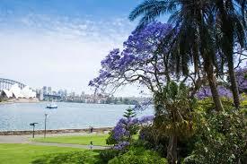 Botanic Garden Sydney Royal Botanic Garden Sydney Climatewatch