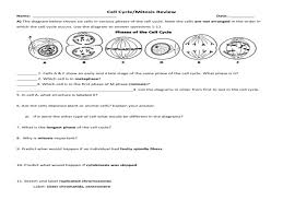 the cell cycle worksheet u2013 manhasset public schools