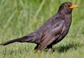 Birds In Your Backyard Backyard Birds