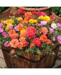 Flower Seeds Online - plantsmans