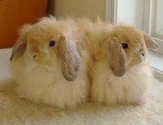 fuzzy lop sophie fuzzy lop bunnies