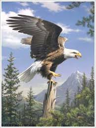 bucilla counted cross stitch picture kits screaming eagle