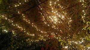 christmas how to put christmas lights on tree palm trees youtube