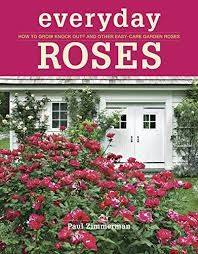 how to grow roses for cutting gardens