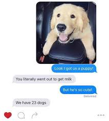 Cute Dog Memes - 50 dog memes to keep you laughing this weekend gotbants
