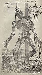 He Made Accurate Drawings Of The Human Anatomy Andreas Vesalius Wikipedia