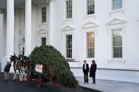 barron and melania trump accept white house christmas tree