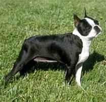 afghan hounds for adoption dog breeds browse 151 dog breeds petfinder
