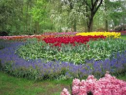 the flowers of summer at growing satisfying summer flowers hgtv