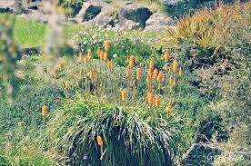 sydney native plants garden u0026 flower festivals 2015 sydney u0026 nsw sydney