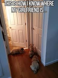 Dog Lover Meme - for the dog lovers album on imgur