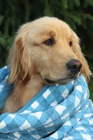 5945 best dog blankets images on pinterest dog blankets animals