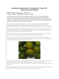 calamansi farming tips citrus landscape architecture