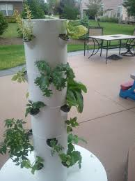 grow food in your backyard with the tower garden gardening