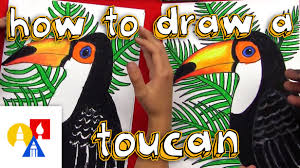 how to draw a realistic toucan youtube