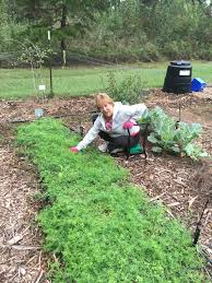 cover crops for gardeners tallahassee com community blogs