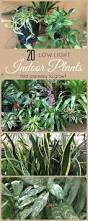native florida plants low maintenance plant low light office plants enrapture indoor corn plant