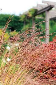 130 best grass foliage images on gardening garden