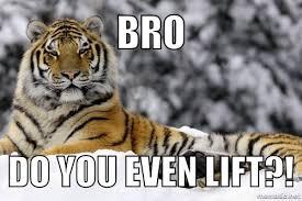 Tiger Meme - tigers petulantpanda