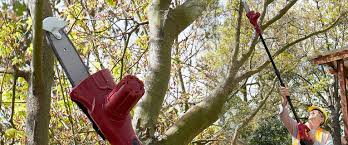 today s treat me cordless tree lopper